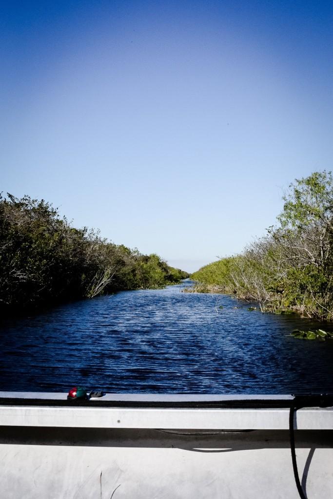 Everglades_1