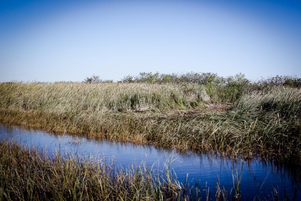 Everglades_4